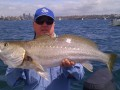 Autumn Jewfish - By Craig McGill