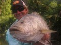 PNG BLACK BASS (lutjanis Goldiei) AND BARRA TRIP IN PICTURES