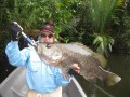 PNG (Baia): AMAZING PICTURES: BLACK BASS, SPOT TAIL BASS AND MANGROVE JACK FISHING