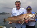 Sydney Harbour Jewfish