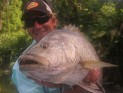 PNG Black Bass (Lutjanis Goldiei)