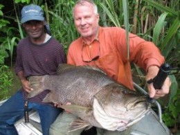 Papuan Black Bass