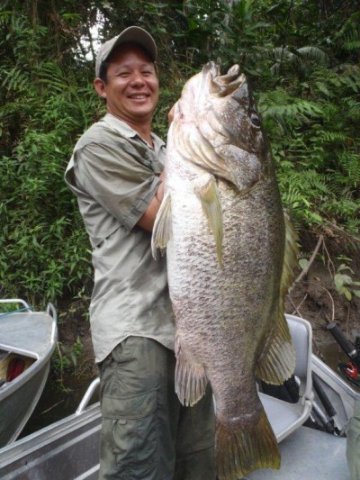 Papuan Big Black Bass And Barramundi Png Barramundi Png